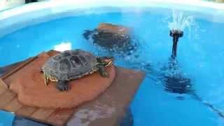 turtle pond/pool