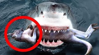 10 Weird Things Found Inside Sharks | If You Ever See This on the Beach, Cry for Help! | Elite Facts