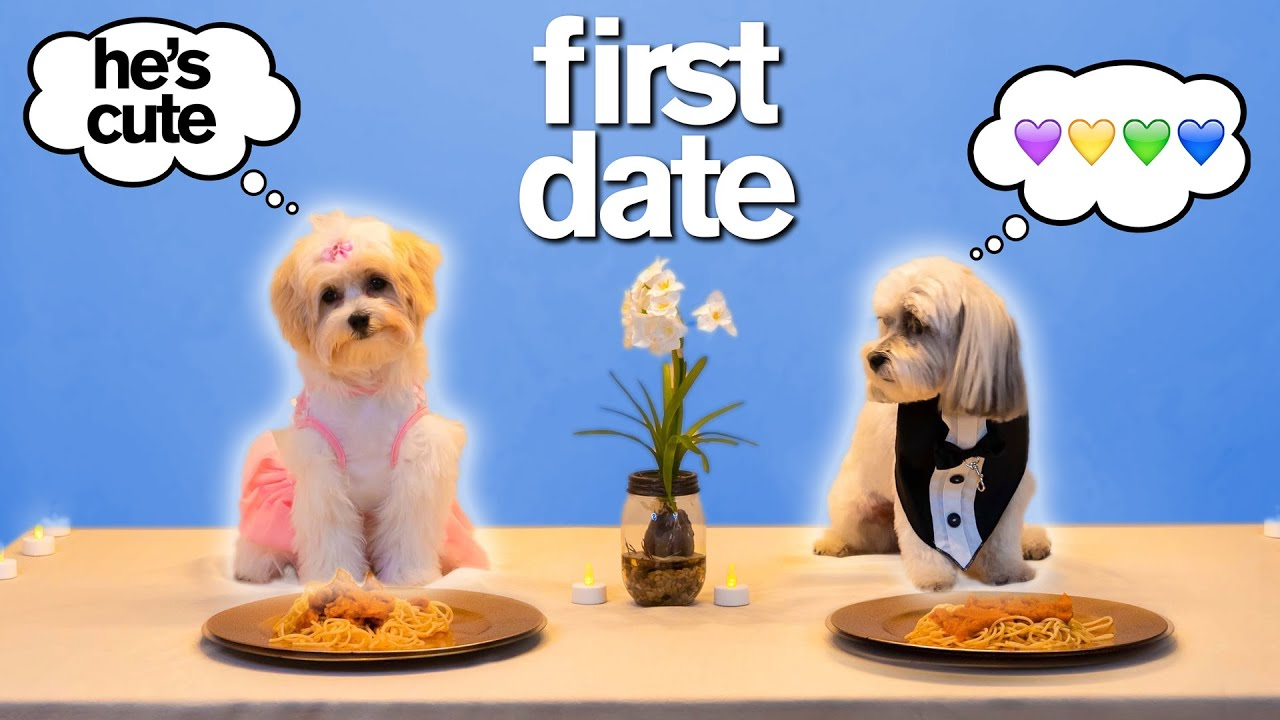 Adorable Dog's FIRST TINDER DATE *Try Not To Say Aww* VERY FUNNY