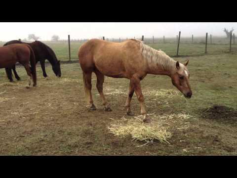 Xxx Mp4 Horse Movie Quot Buck Quot Stupid Woman Kills Horse For Doing What She Taught It Rick Gore Horsemanship 3gp Sex
