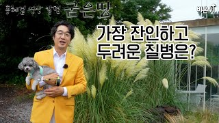 [영상칼럼] 홍혜걸의 굳은땅 #8 - 가장 잔인하고 두려운 질병은?