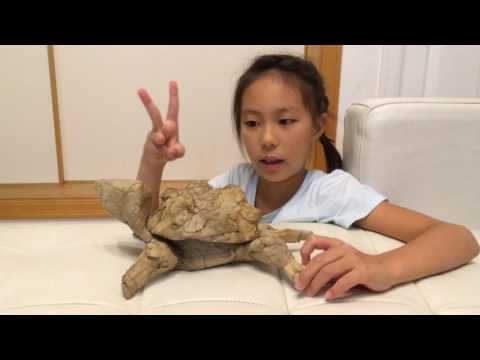 Cardboard art (turtle)