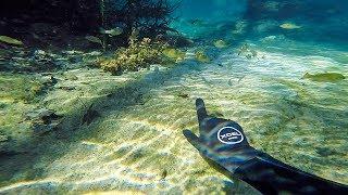Hand Feeding Fish Under Water!!! (Underground Cave)