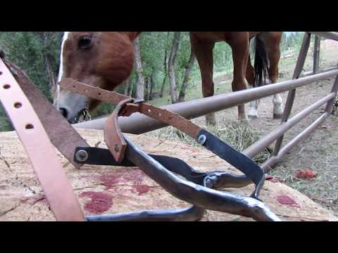 Diy Spurs [For horse riding]
