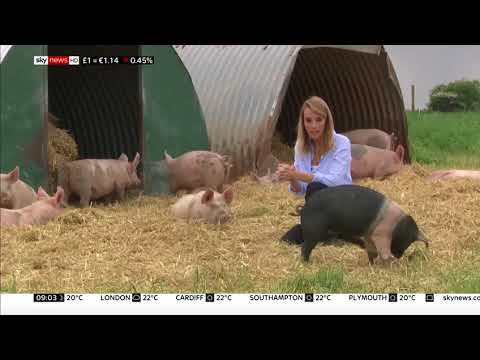 Pigs beaten with pitchforks in undercover footage - Rebecca Williams