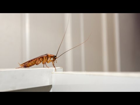 We Share Our Homes With Hundreds Of Different Insects