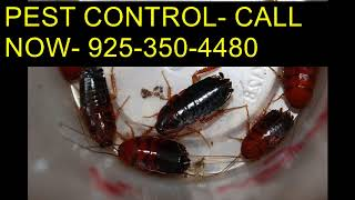 Download Dial (925)350-4480 Scorpion Treatment Service Clovis CA Video