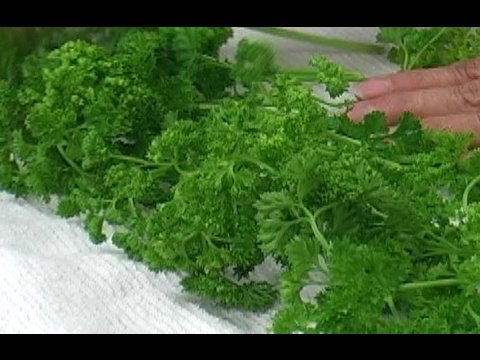 Parsley - How to Store Parsley