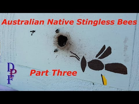 Australian Native Stingless Beekeeping - Part 3 - Splitting a boxed hive