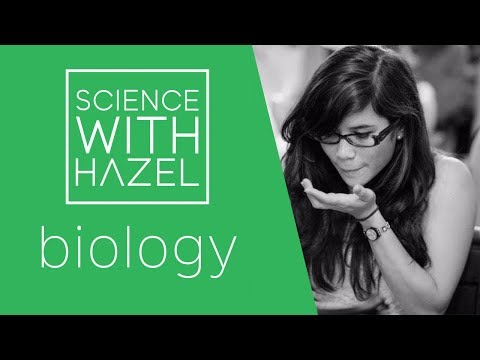 Genotype, Phenotype & Punnett Squares - GCSE Biology Revision - SCIENCE WITH HAZEL