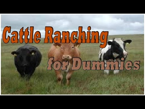 Cattle Ranching For Dummies