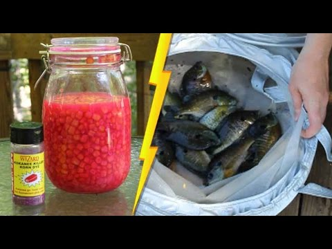 Secret fish bait and $8 portable livewell