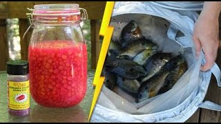Catch tons of catfish bait with slim jims - store live bait in