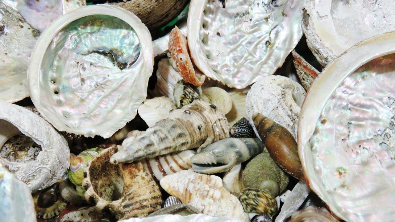 Seashells - How to Grind Cut and Polish | Liz Kreate