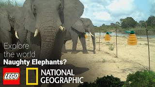 How to control naughty elephants? LEGO + National Geographic Explore the World!