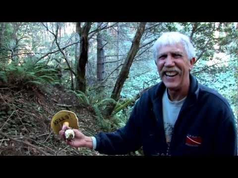 Mushrooming in Mendocino - Visit California