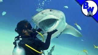 Tiger Shark Encounter – Director