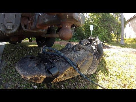 Alligator Trapper For a Day - Florida