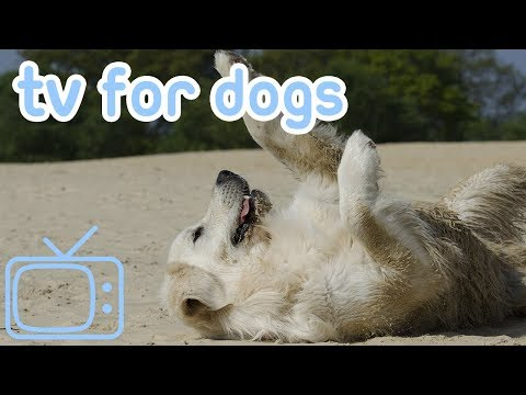 Virtual TV Extravaganza for Dogs! Take a Relaxing Nature Walk with Dogs to Keep Your Dog Entertained