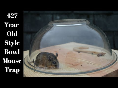 427 Year Old Style Bowl Mouse Trap In Action. Mascall Mouse Trap.