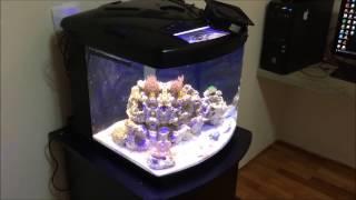 Meu Nano Reef (aquÁrio Marinho) Tl-450