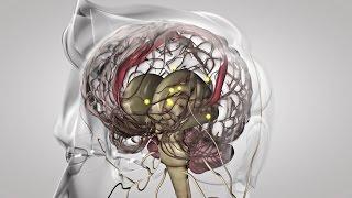 Au coeur des organes : La commande du mouvement
