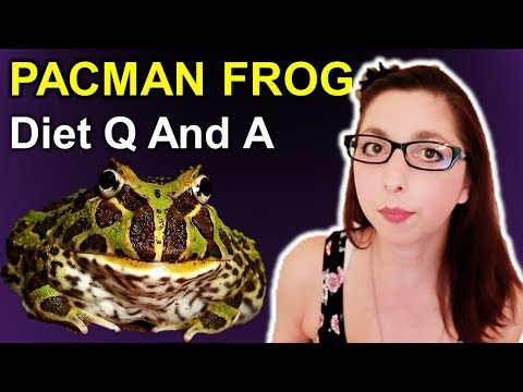 Pacman Frog Diet Q And A