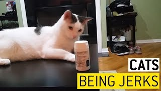 Cats Messing With Your Stuff    JukinVideo