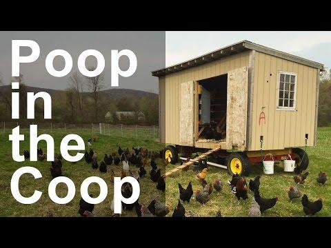 Poop from the Chicken Coop