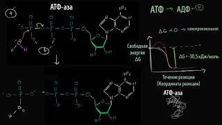 Download Механизм гидролиза АТФ | Энергия | Биология Video