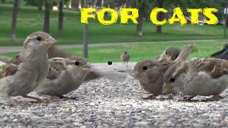 猫のためのビデオ - 鳥、リス、ウサギ、シマリス、ハト、