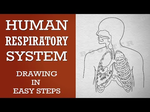 How to draw human respiratory system in easy steps :10th Biology : CBSE Syllabus :NCERT X Science