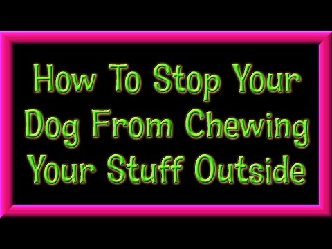 How To Stop Your Dog From Chewing Your Stuff Outside