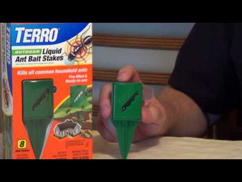 Borax Ant Killer - How to Keep Ants Out of Your House