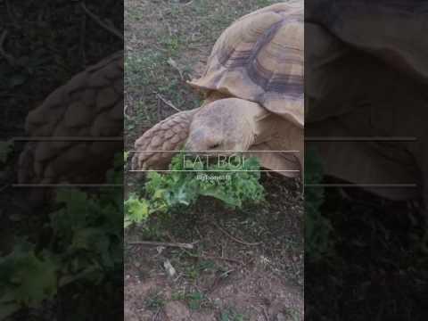 When you feel like watching a tortoise eat