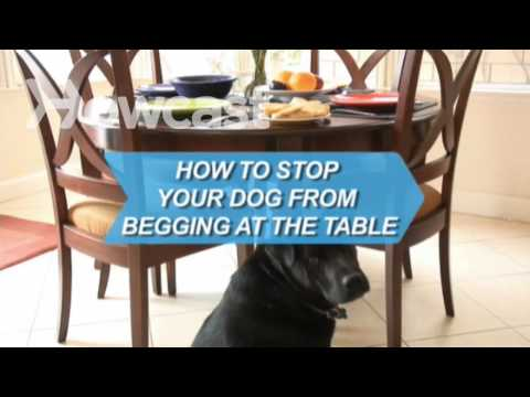 How to Stop Your Dog from Begging at the Table
