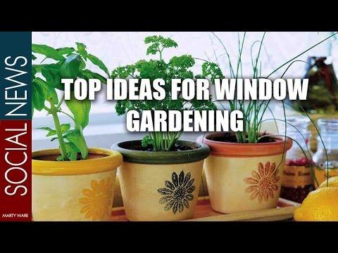 Top Ideas For Window Gardening