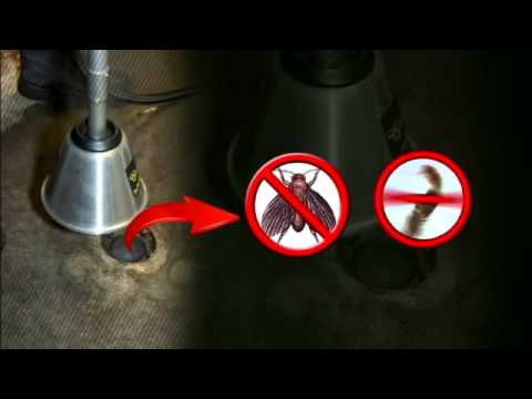 ▶ Kill Fruit Flies, Drain Flies, Restaurant and Bar Flies, Kill Sewer Flys with Steam