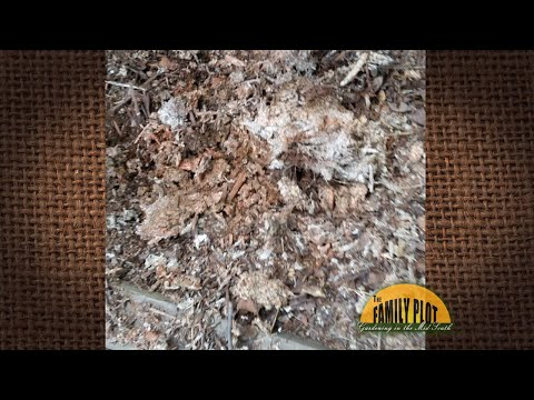 Q&A - My Mulch Looks Like It Has Mold On It