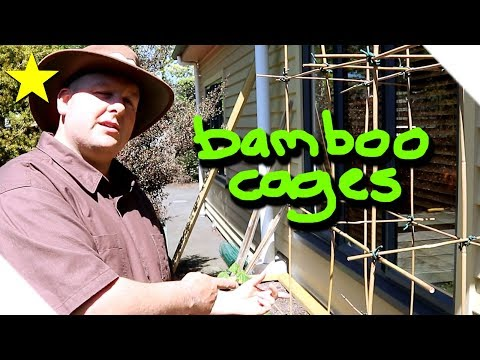How to make bamboo support cages for tomato plants