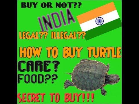 HOW TO BUY TURTLE  कछुआ कैसे ख़रीदे  