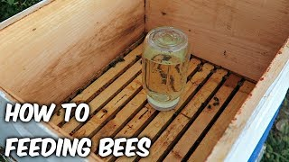 Feeding Bees in a Fall - Beekeeping