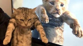 CATS or THE MOST AMUSING PETS in the world!