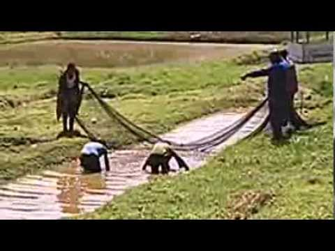 POOR WATER QUALITY IN FISH PONDS - What went wrong?
