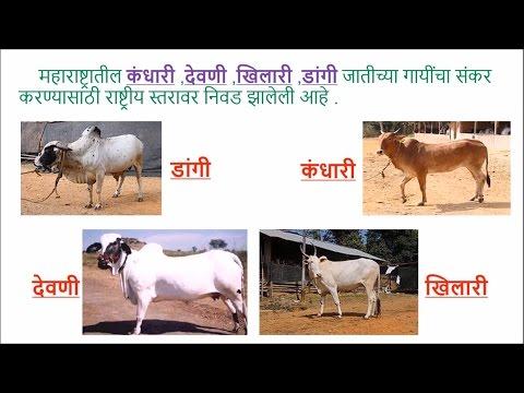 पशुसंगोपन (Animal Husbandry) - Class 8 Science - Marathi