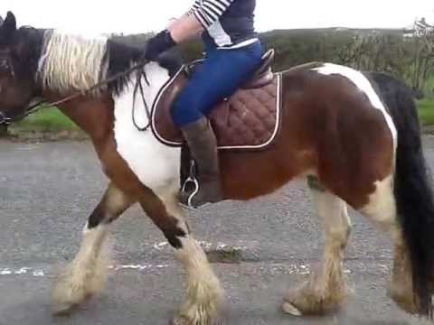 Lame horse - back / hind leg(s) giving way ?? HELP! Watch at 1:00m & end