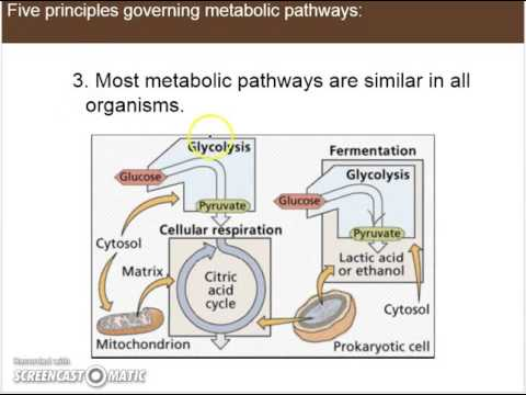 Ch 6.1a - Five general principles governing metabolic pathways