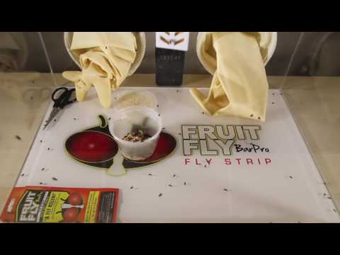How to get rid of House Flies with Fruit Fly BarPro