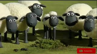 شون اند شيب shaun and the sheep