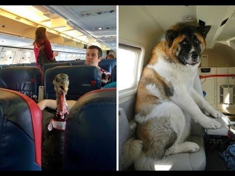 Animals flying on planes - Flights That Had The Best Passengers